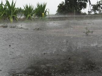 06 Tropical rain