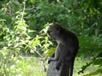 25 Monkey Langkawi