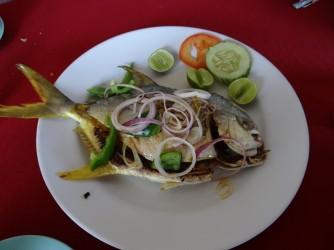 67 Fish food