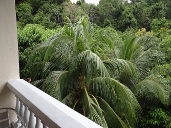 28 Jungle view