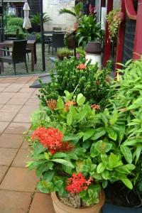 09 Flower in hotel
