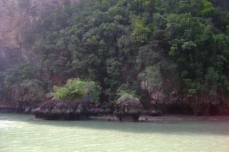 30  Tree on island
