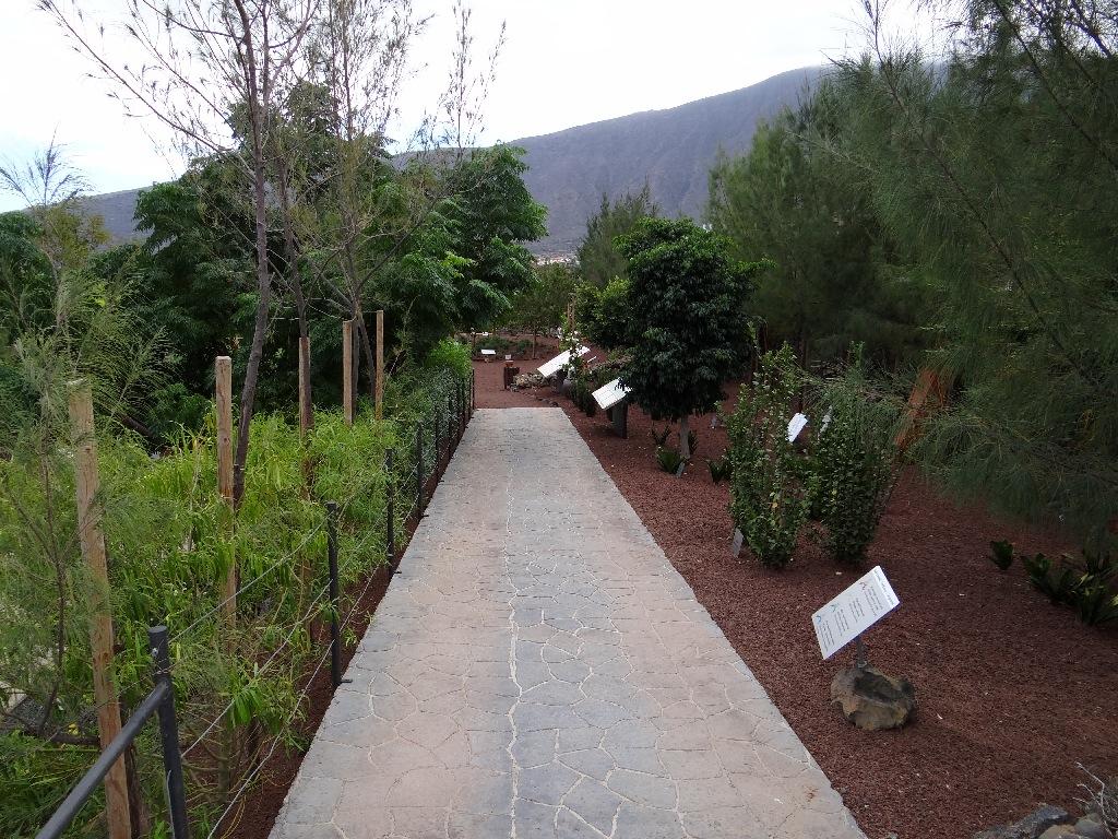Pyramids of Guimar trip garden