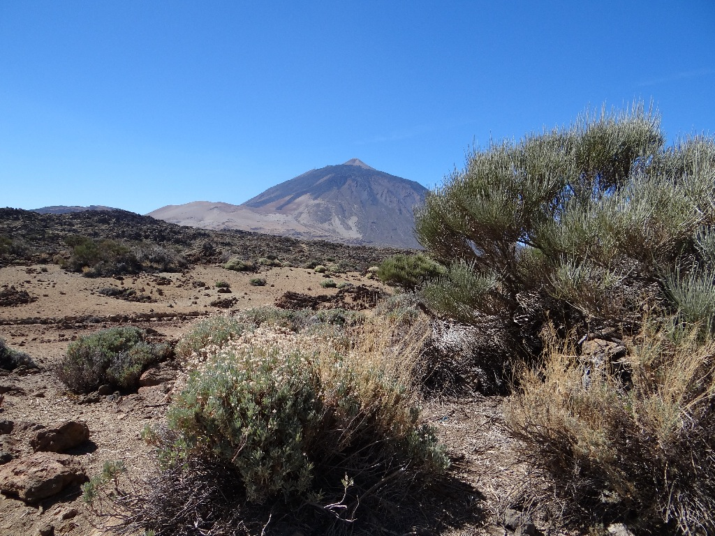 Tiede north view