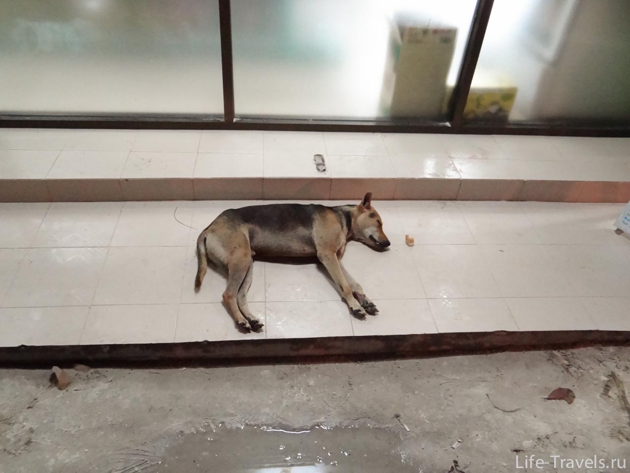 Dog sleeping in the store store