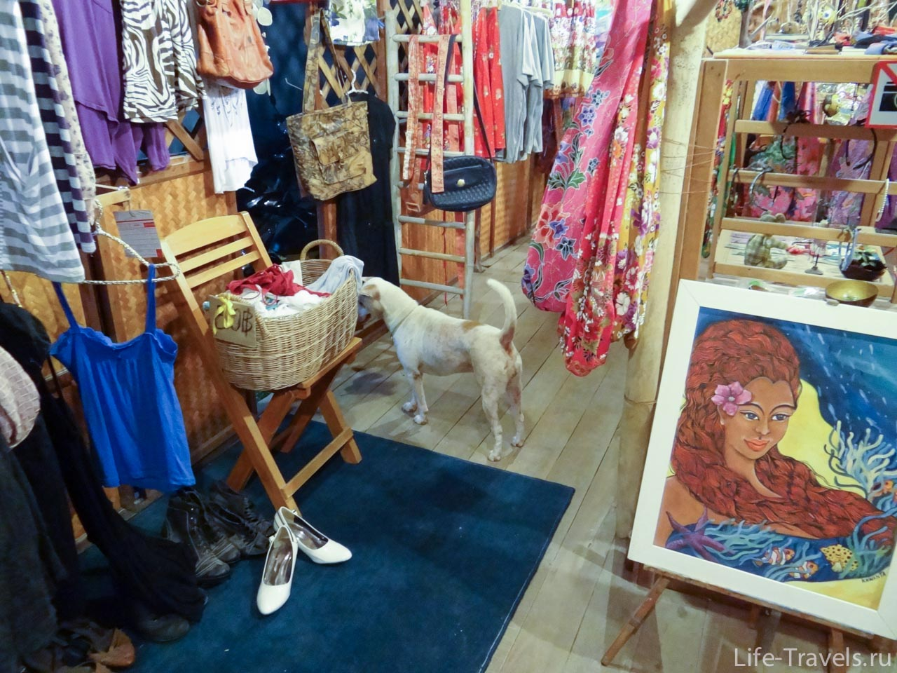 Dogs in the store