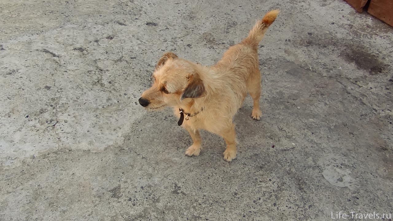 Wild dog Barabaka