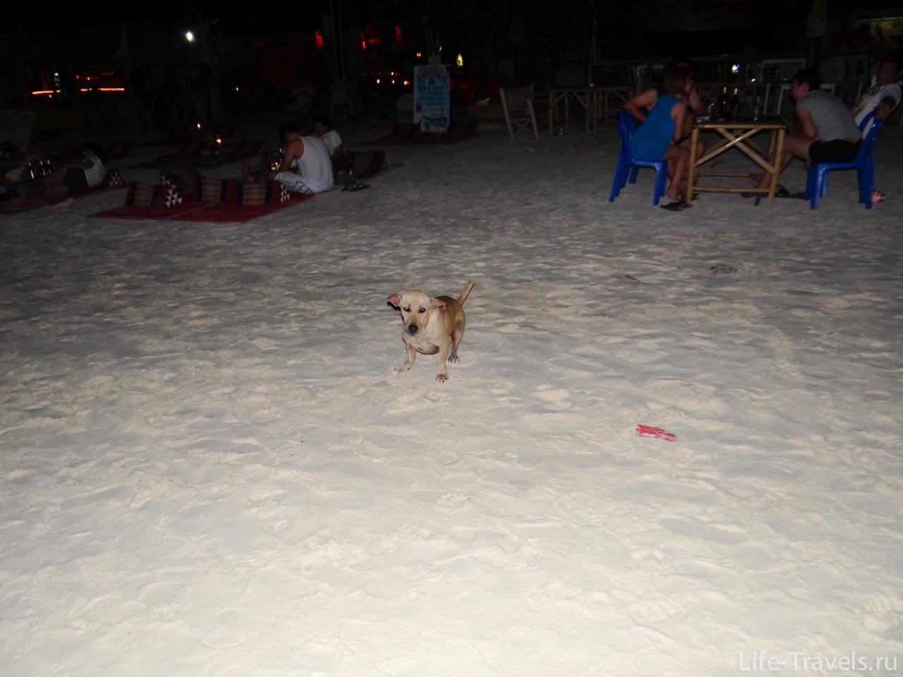 night cafe on the beach and dog