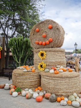 Wonderful pumpkins and Port Aventura
